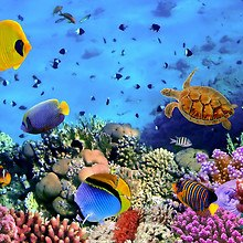 Coral Reef - Tropical Fish