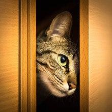 Cat Peeking Through Door