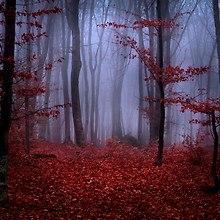 Dark Red Forest