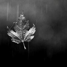 Black And White Maple Leaf