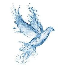 Fluid Bird