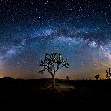 Tree Under Our Galaxy