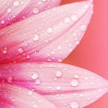 Pink Water Petals