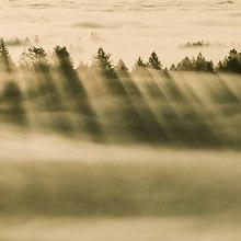 Forest Fog (OS X)