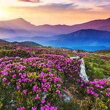 Wonderful Mountain Flowers