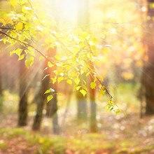 Leaf Rays