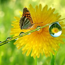 Butterfly Water Droplet
